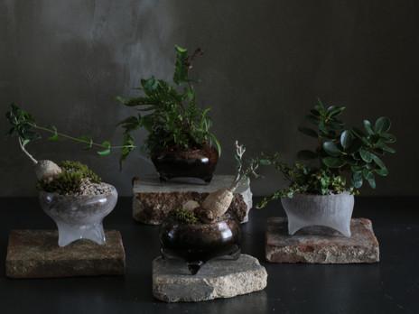 「植物のある生活」今村知佐+ Innocent garden