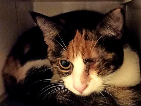 Kranke Katzen brauchen Hilfe