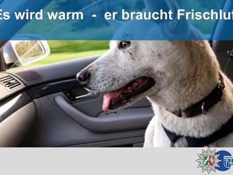 Hunde im Sommer nicht im Auto lassen