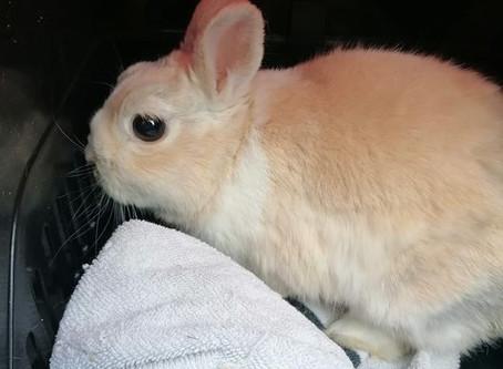 Impfpaten für Kaninchen gesucht