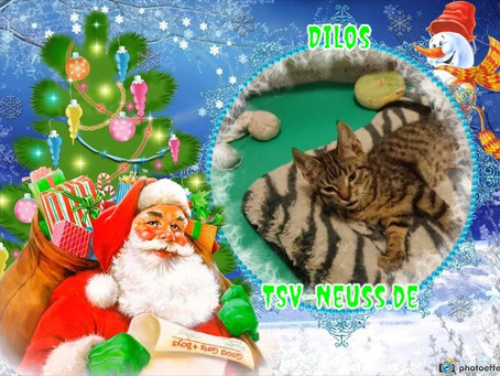 Tierleben retten zu Weihnachten