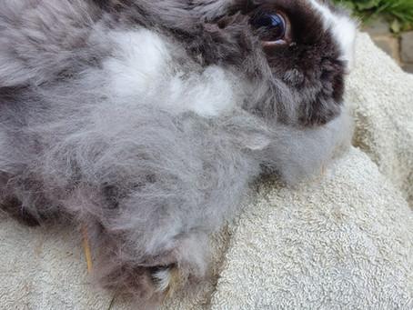 Verfiltzes Kaninchen gerettet