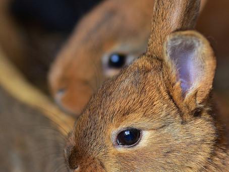 Kaninchen brauchen Platz und Partner