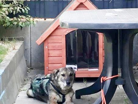 Altersruhesitz für Traumhund