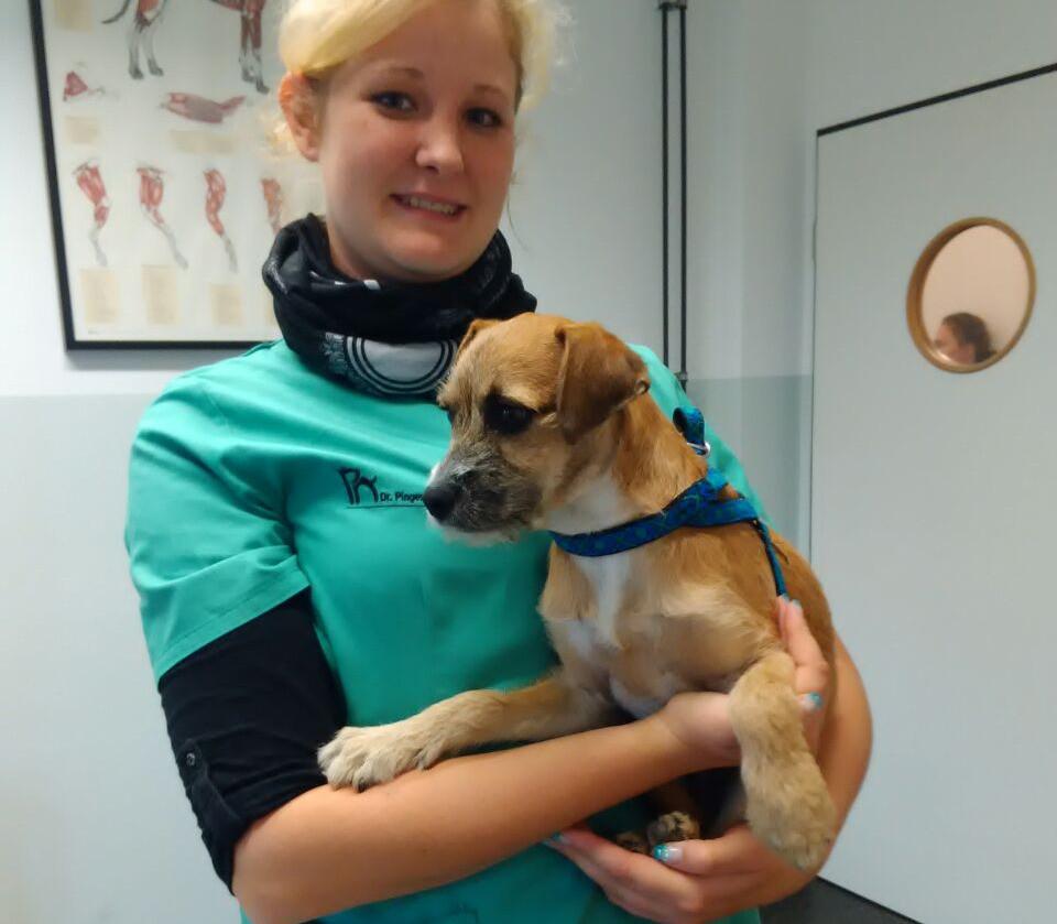 Balou beim Tierarzt in Deutschland