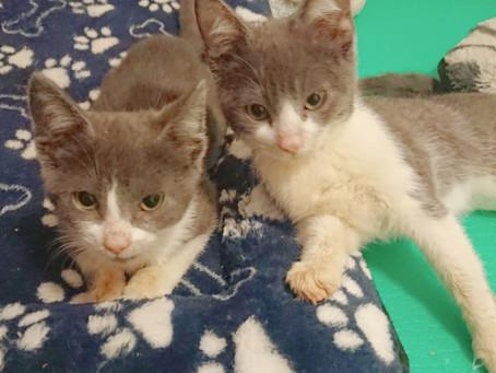 Kitten brauchten Hilfe vom Tierarzt