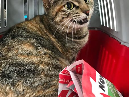 Boxen für Katzentransport gesucht
