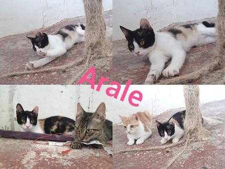 Junge Katzen suchen ein Zuhause