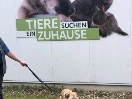 Unsere Hunde im Fernsehen