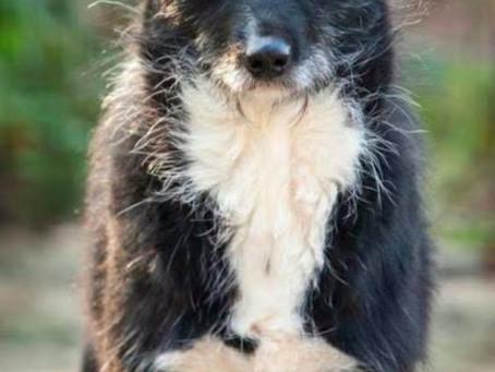Pensionspaten für Hunde aus Polen  gesucht!!