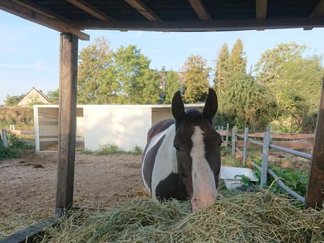 Unterstützung für gerettete Pferde