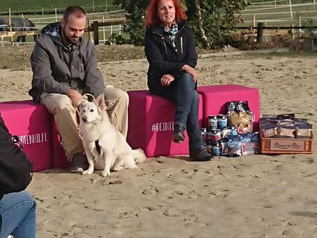 Unsere Hunde und Katzen im November bei Tiervision