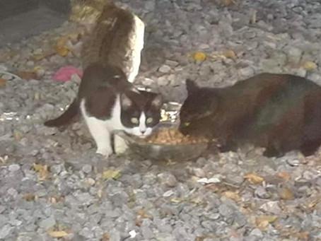 Hungernde Straßenkatzen in Mönchengladbach