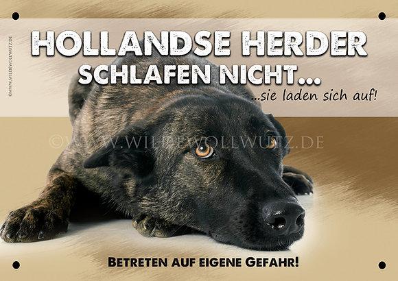 Hollandse Herder schlafen nicht