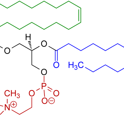 """The Miracle Molecule""- Phosphotidylcholine"