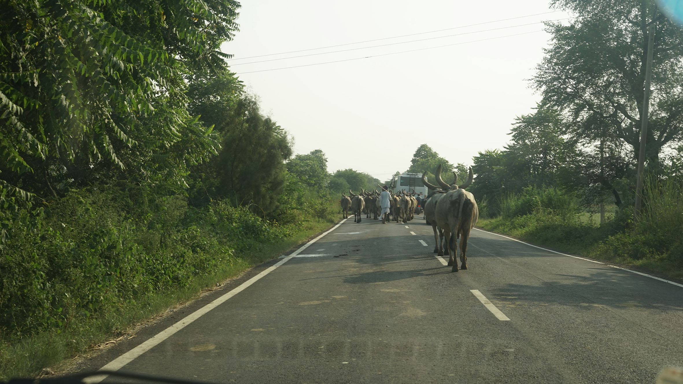 Conflicts of transhumance