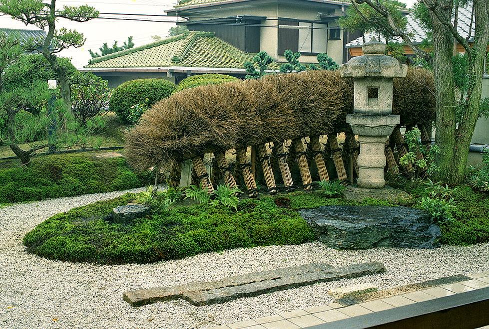 海堀常-1柏の木と網干垣.jpg