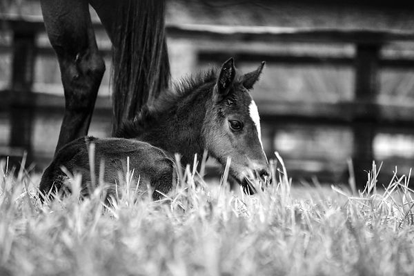 BW FOAL FRONT PAGE.jpg