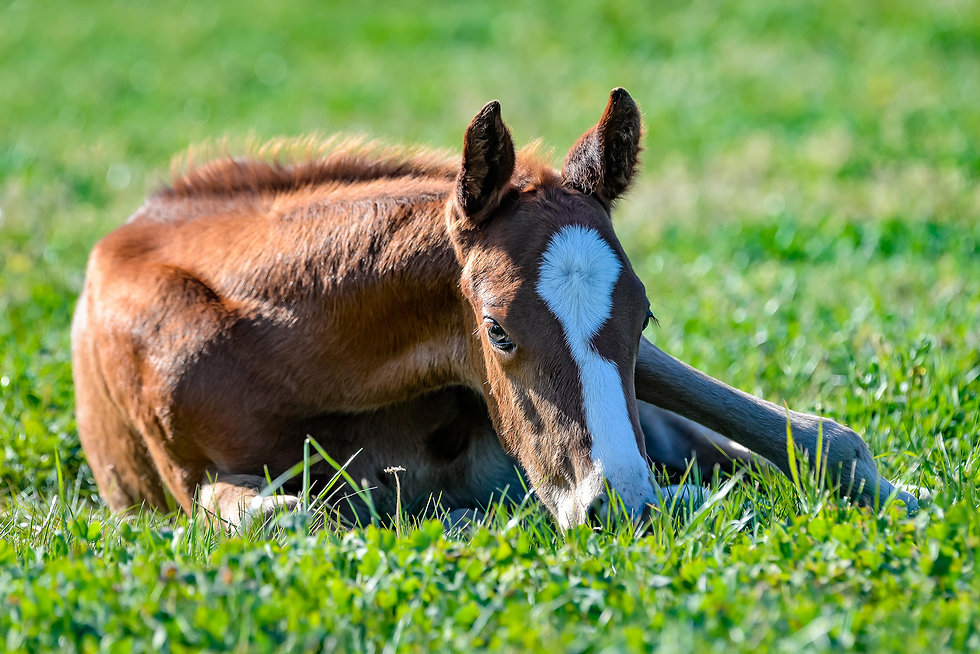 CP Home Page banner Foals Oct 2020-1544.jpg