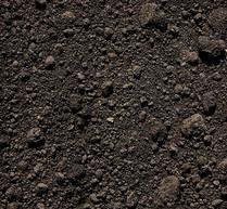 Black Dirt/Top Soil