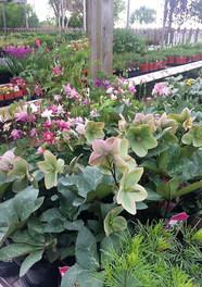 Williamsfield_garden_club_outdoor_nurser