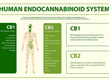 The Endocannabinoid System