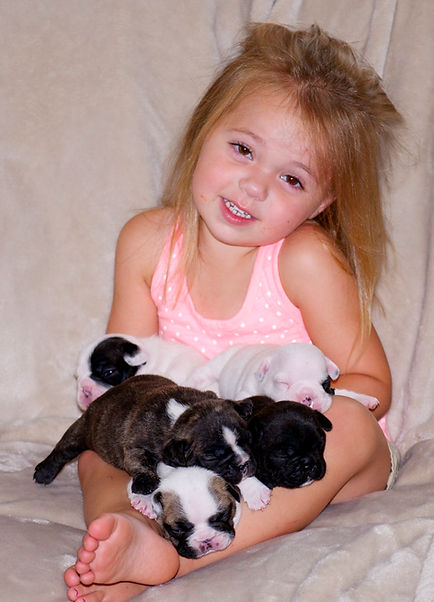 A picture of 4 Darr's Bullies English Bulldog puppies