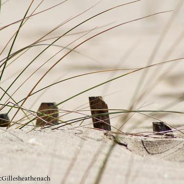 dunes14.jpg