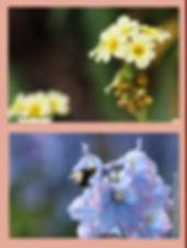 gardens 6.jpg