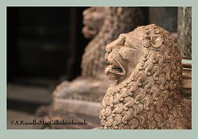 lions3.jpg