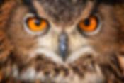 owl3.jpg