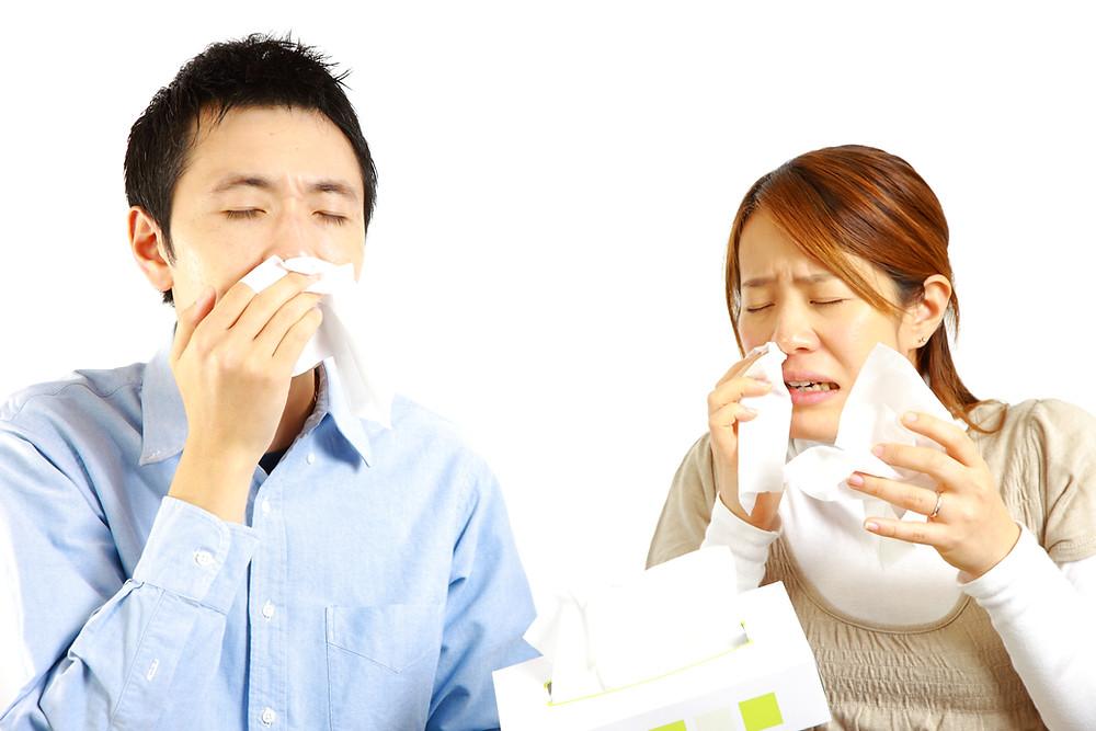 Sneezing is the main presentation of allergic rhinitis. Mata gatal dan berair, hidung sentiasa berhingus yang jernih, adalah antara tanda-tanda kerap alergi hidung.