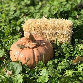 pumpkin_el.jpg