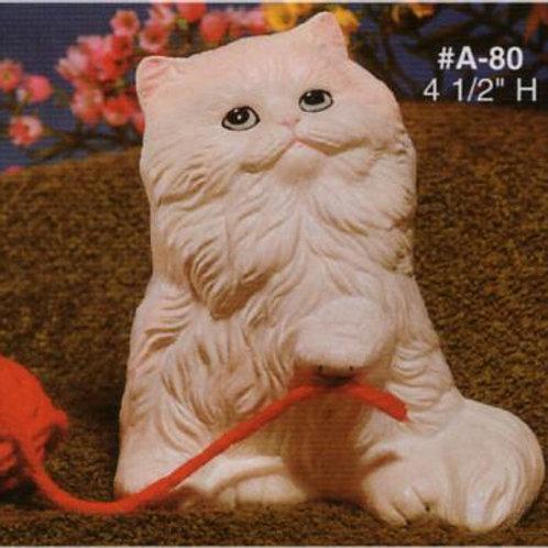 Alberta's Sitting Up Kitten