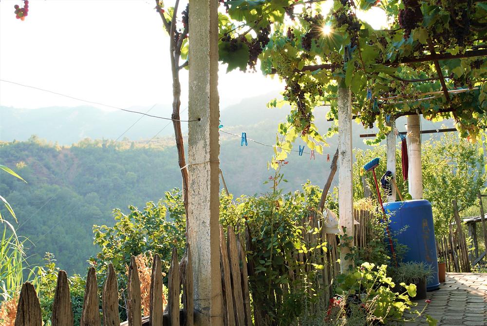Vinrankor i Albanien