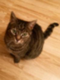 Cat on Engineered wood floor.jpg