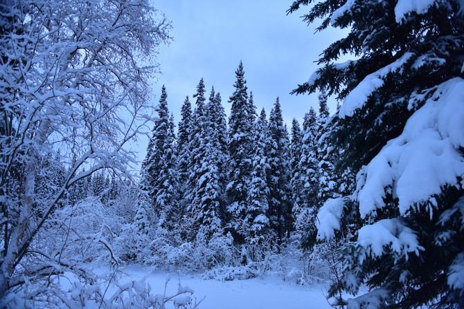 Winter in Fairbanks