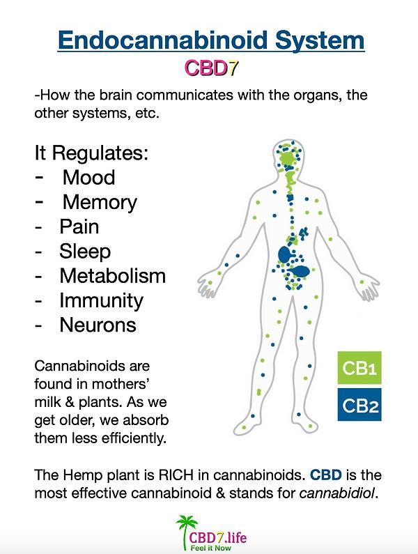 Endocannabinoid System CBD7.png