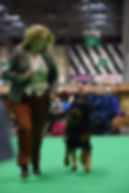 crufts 2018 Anne with Castlemary.jpg