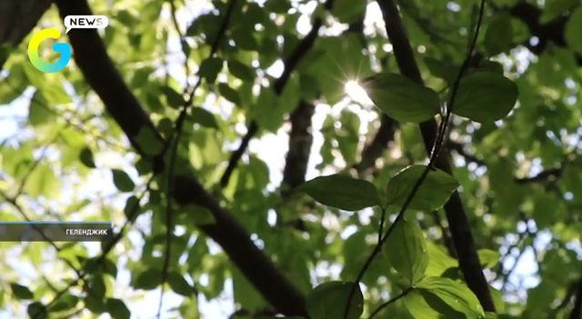 🌳65 тысяч гектаров лесного массива