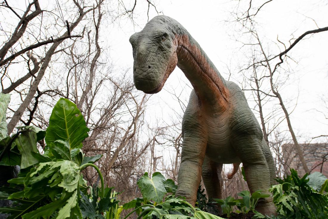 julie larsen maher_9986_dinosaur safari_