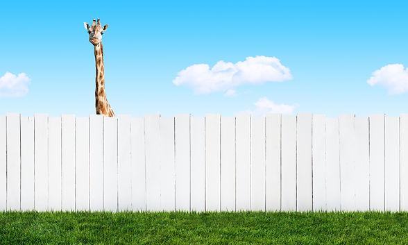 curious-neighbor-484815097_4288x3240.jpg