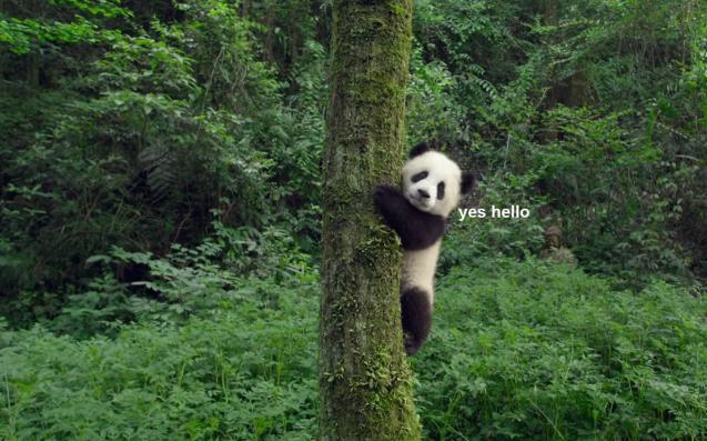 imax-pandas-film-lead-637x397