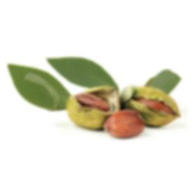 jojoba-oil-plant.jpg