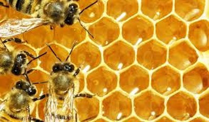 The Crystallography of Honey Bees