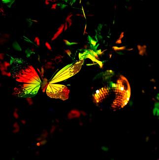 Butterfly Ball 146.jpg