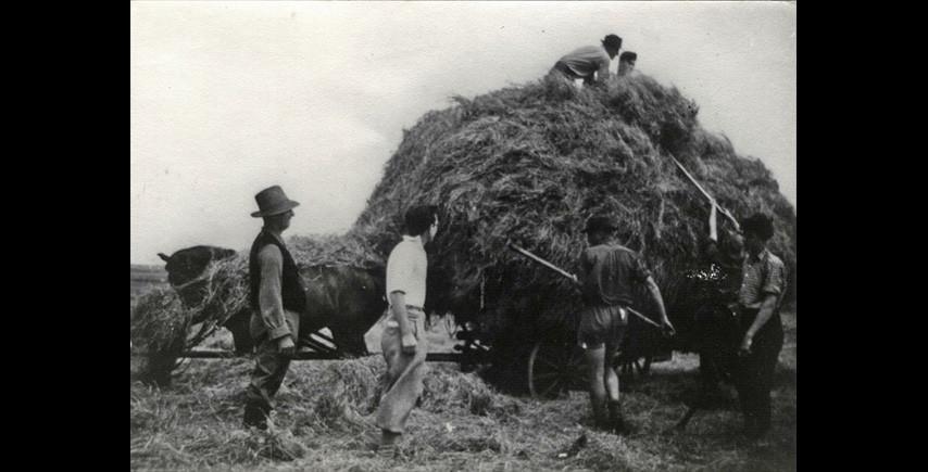 Youths doing farm work in the Maccabi Ha