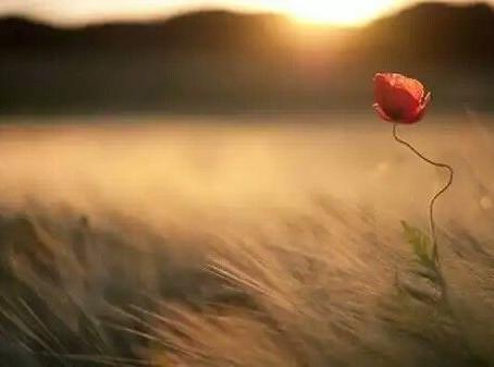 A flor solitária