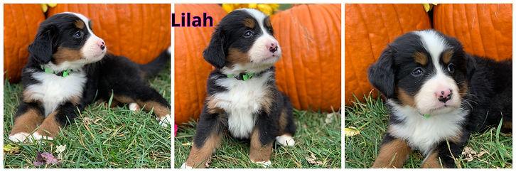 Lilah - female - lt green.jpg