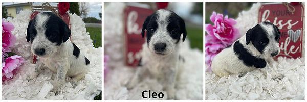 Cleo - 4-9-21.jpg